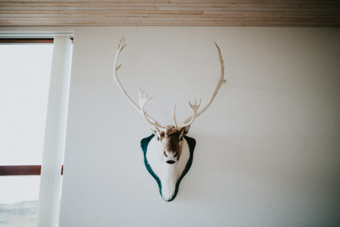 A stuffed deer head is hanging on the wall.