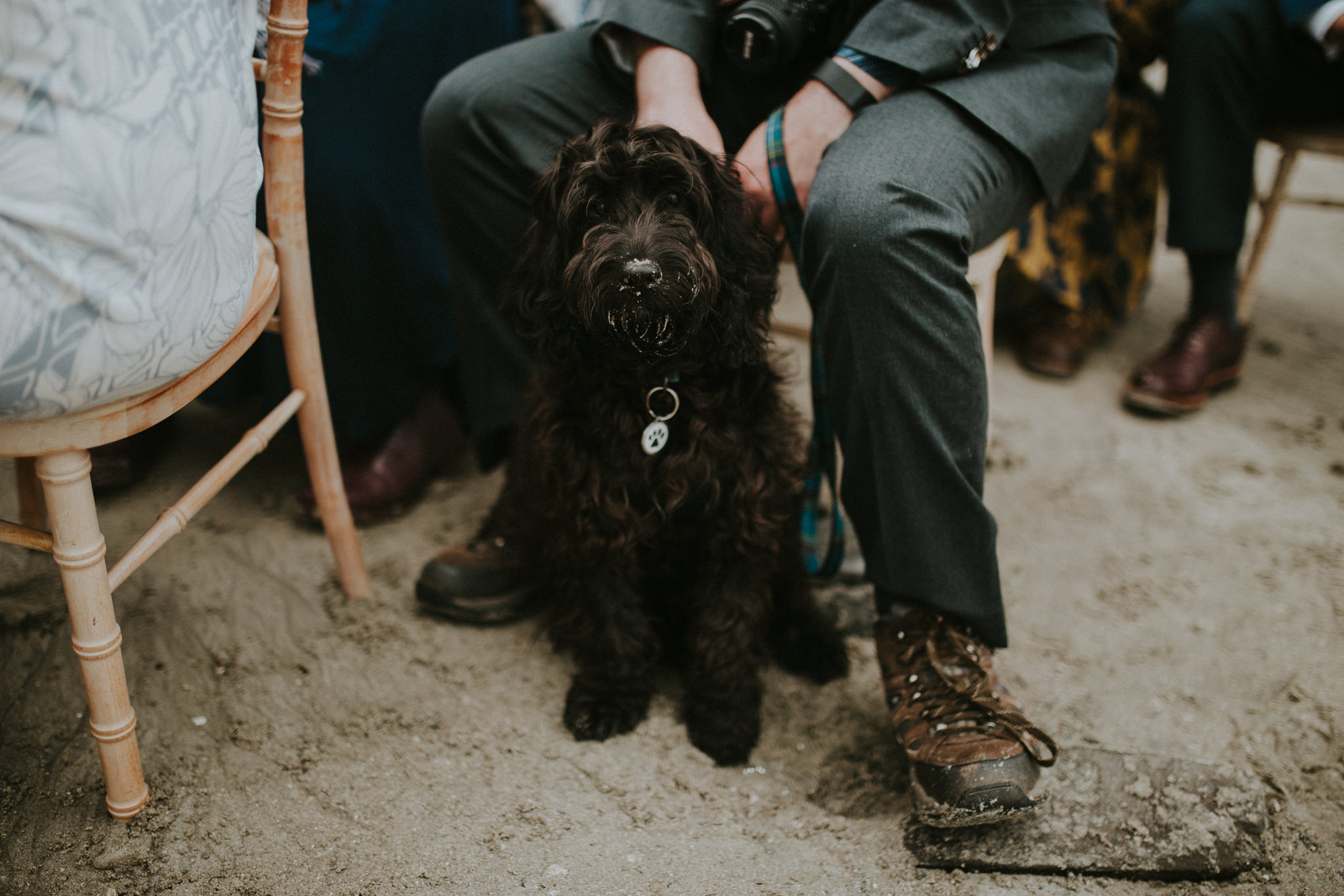 A dog is sitting on the beach in front of a wedding guest.