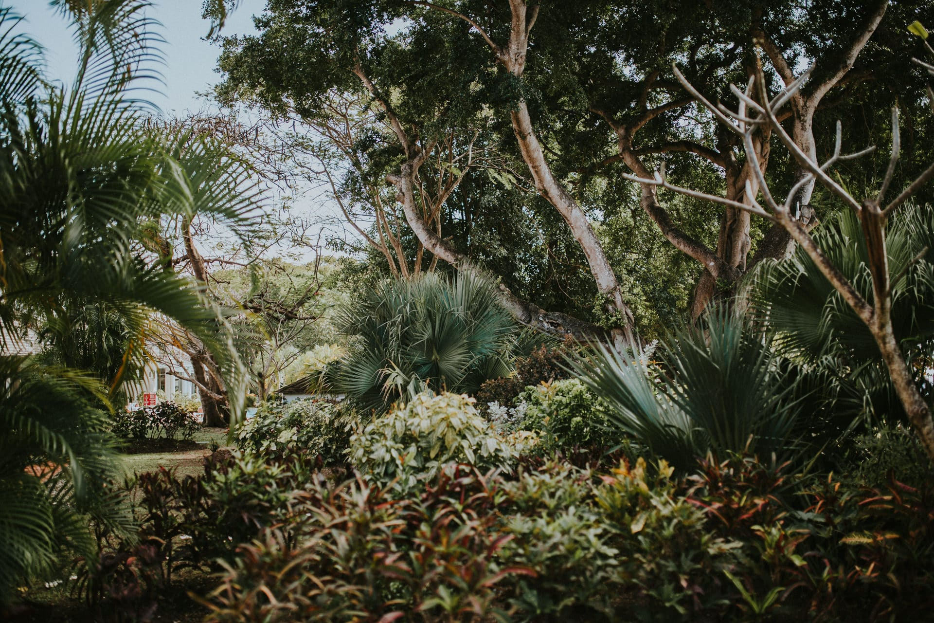 The Barbados Wedding location features palm trees, scrubs and large tropical trees.