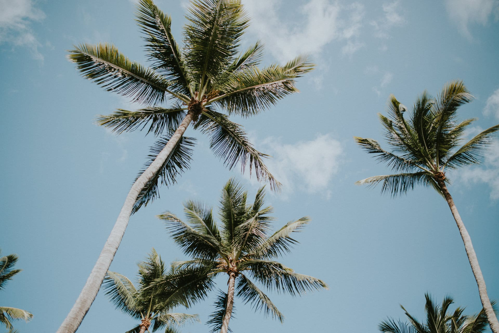 This Barbados wedding photo shows palm trees and a blue sky.