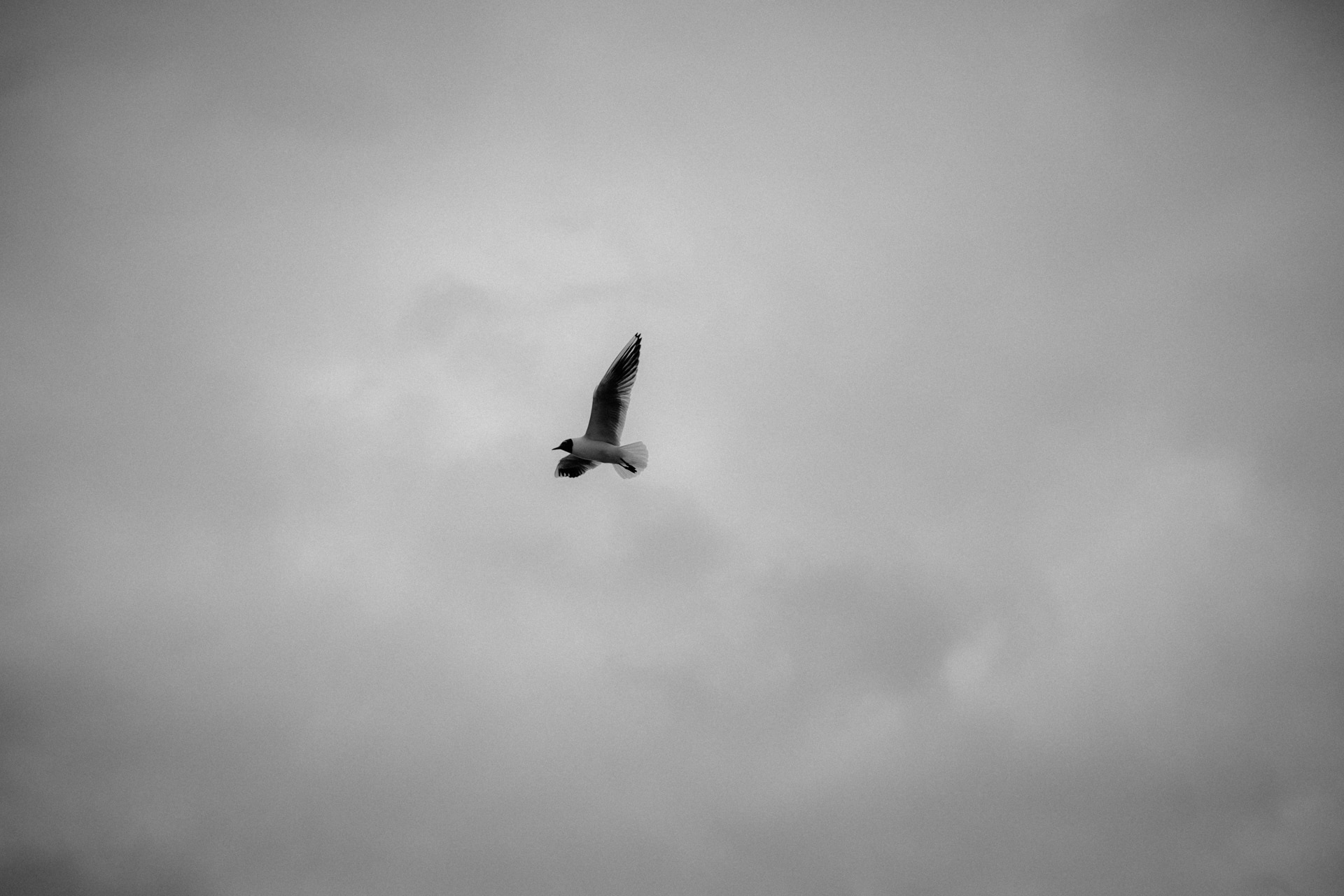 A seagull is flying through the sky.