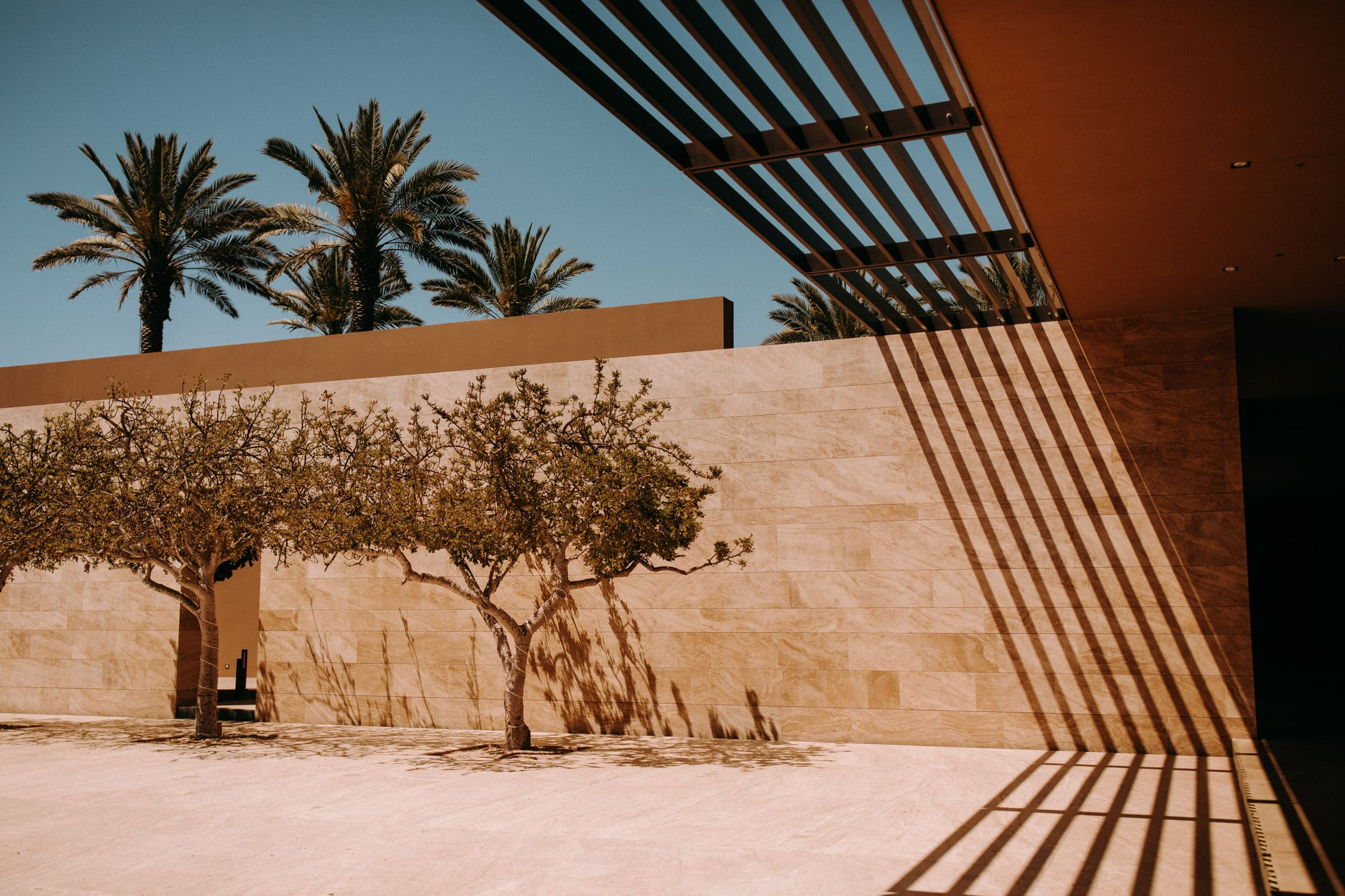 The location featrues shadow play at the JW Marriott, with trees and palm trees.