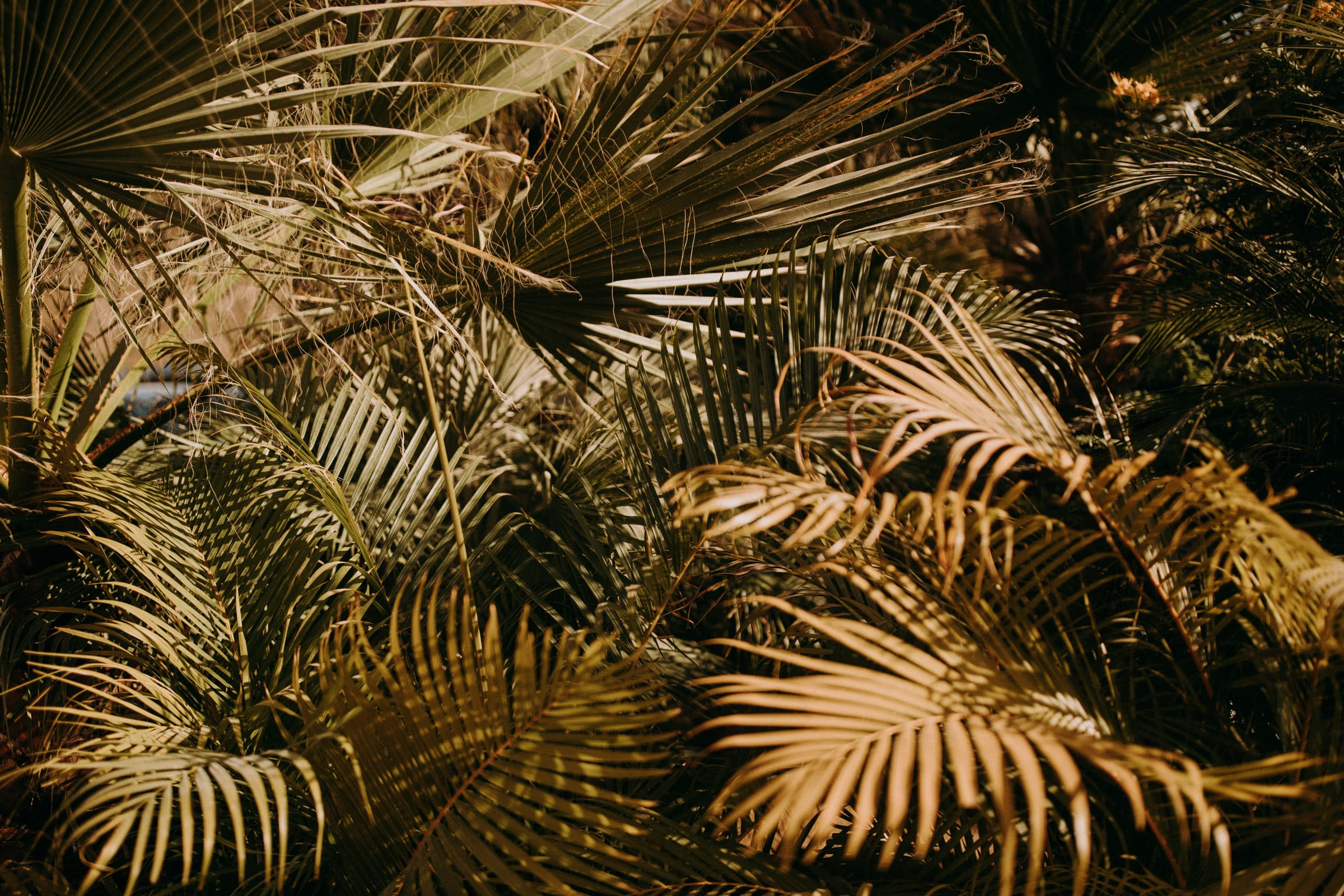 The picture shows leaves of palm trees.
